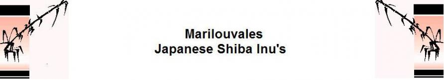www.japaneseshibainu.uk Logo